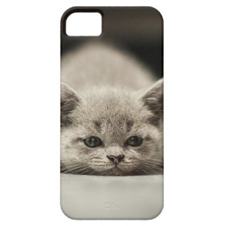 Lazy cat theme marries iPhone 5 cover