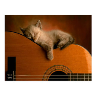 Lazy Kitten Napping on a Guitar Postcard
