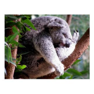 Lazy Koala Postcard