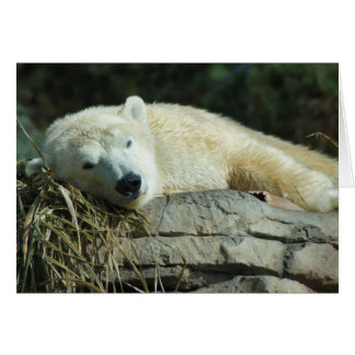 Lazy Polar Bear Blank Card