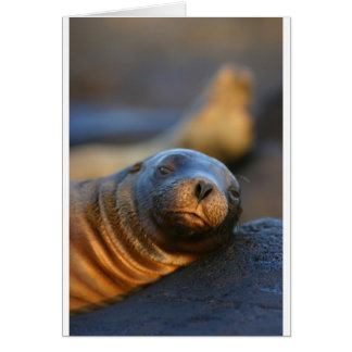 Lazy sea lion card