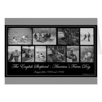 Le berger anglais - chien de la ferme de carte de vœux