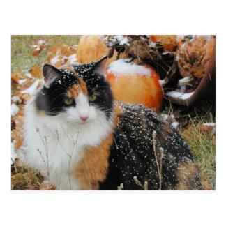 Le chat de Milou pense que l'hiver vient Carte Postale