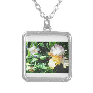 Le collier d'iris jaune