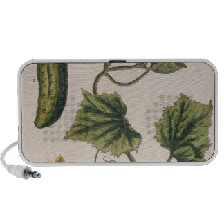 """Le concombre de jardin, plaquent 4 """"d'un de fines  haut-parleurs portables"""