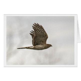 Le faucon du tonnelier carte de vœux