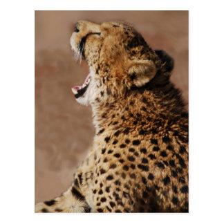 Le guépard a pu effrayer un lion cartes postales