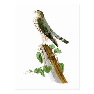 Le Petit Caporal John Audubon Birds of America Postcard