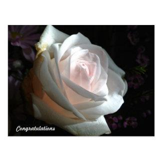 Le rose blanc - félicitations cartes postales