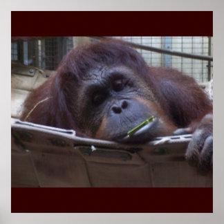 Le singe triste poster