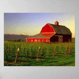 Le soleil de soirée sur une grange dans Skagit de  Poster