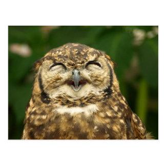 le sourire du hibou ! ! :) cartes postales
