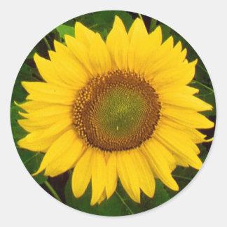 Le vert simple de tournesol laisse la fleur jaune autocollant