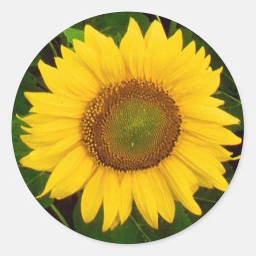 Le vert simple de tournesol laisse la fleur jaune adhésifs ronds