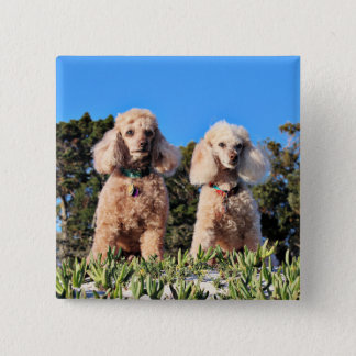 Leach - Poodles - Romeo Remy 2 Inch Square Button