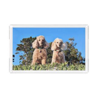 Leach - Poodles - Romeo Remy Acrylic Tray