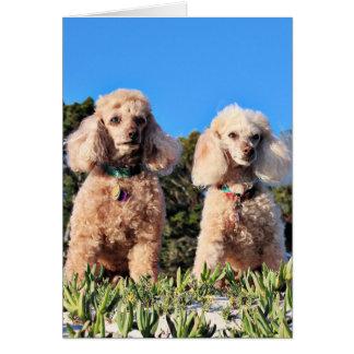 Leach - Poodles - Romeo Remy Card