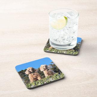 Leach - Poodles - Romeo Remy Coaster