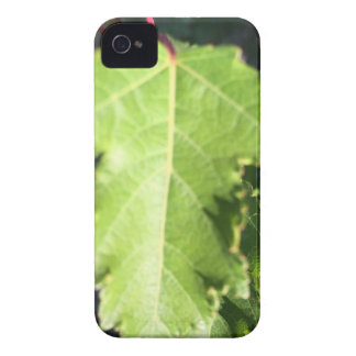 Leaf Case-Mate iPhone 4 Cases