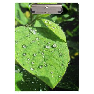 Leaf Clipboard