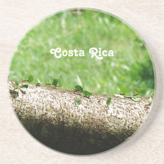 Leaf Cutter Ants in Costa Rica Beverage Coaster
