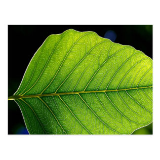 Leaf Detail Postcard