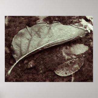 leaf fling posters