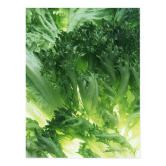 Leaf Lettuce Postcard