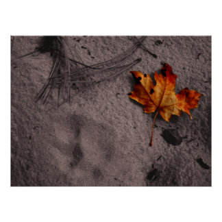 Leaf Next to Mountain Lion Footprint Poster