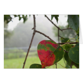 leaf turning red Fall in Florida Card