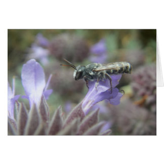 Leafcutter Bee Blank Card