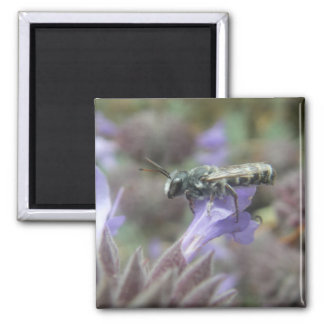 Leafcutter Bee Photo Magnet