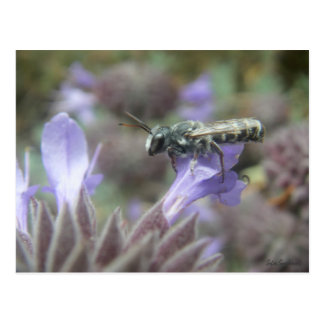 Leafcutter Bee Postcard