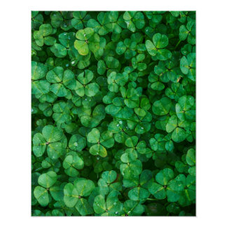 Leafy Green Clovers with Water Droplets Poster