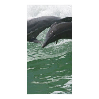 Leaping Dolphins Card