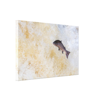 Leaping Salmon Canvas Print
