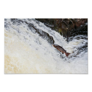 leaping salmon poster