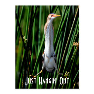 leastbittern, Just Hangin' Out Postcard