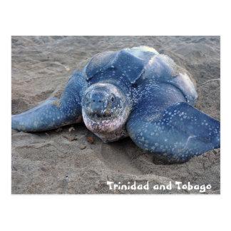 Leatherback Turtle in Trinidad and Tobago Postcard