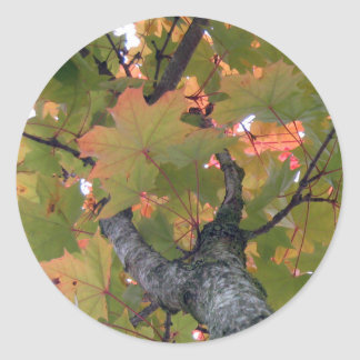 Leaves 07 classic round sticker