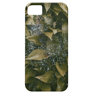 Leaves After Rain iPhone 5 Case