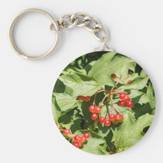 Leaves and berries  viburnum opulus close-up basic round button keychain