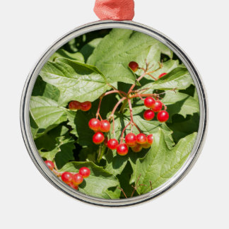 Leaves and berries  viburnum opulus close-up Silver-Colored round ornament