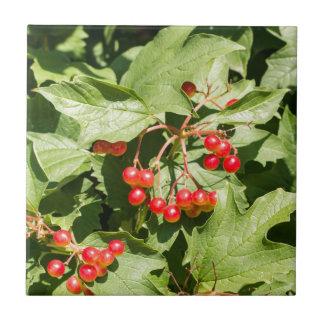 Leaves and berries  viburnum opulus close-up tile