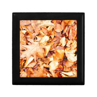 Leaves background gift box