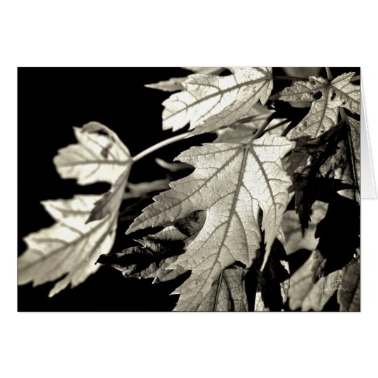 Leaves [Greeting Card] Card