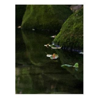 Leaves in River Pool Artwork Postcard