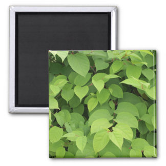 Leaves Magnets