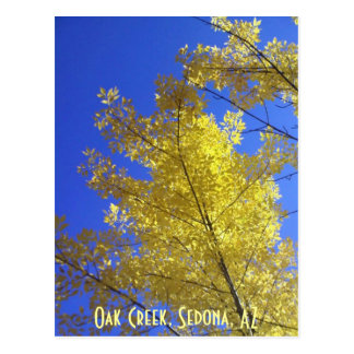 Leaves, Oak Creek, Sedona, AZ Postcard