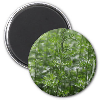 Leaves of absinthe 2 inch round magnet